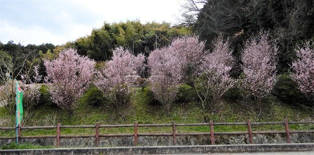 中島農園附近の眺め (1)