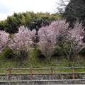 写真: 中島農園附近の眺め (1)