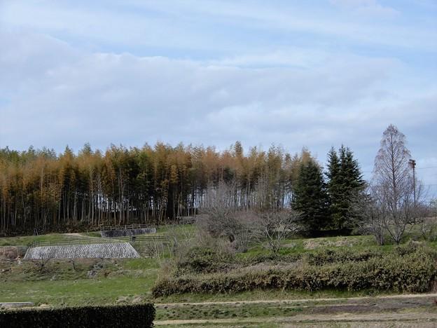中島農園附近の眺め (3)