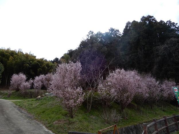 中島農園附近の眺め (4)
