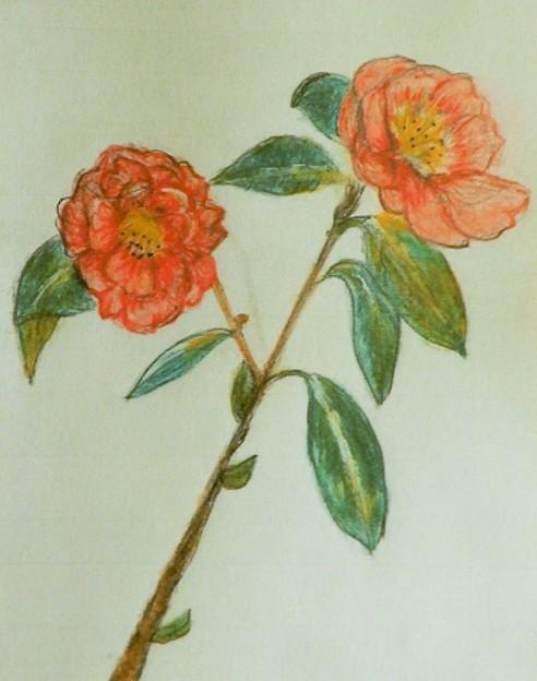 山茶花(第172回展)