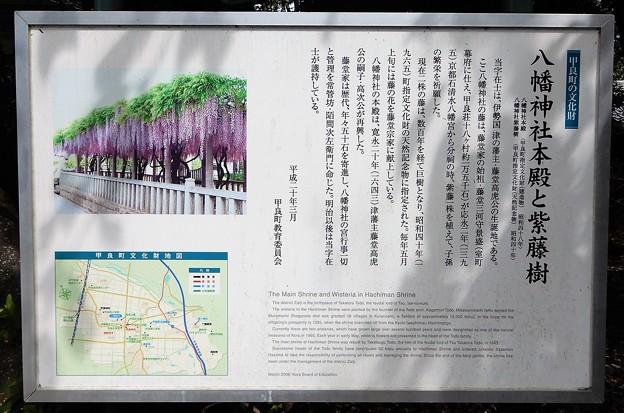 10在士八幡神社と藤 (3)