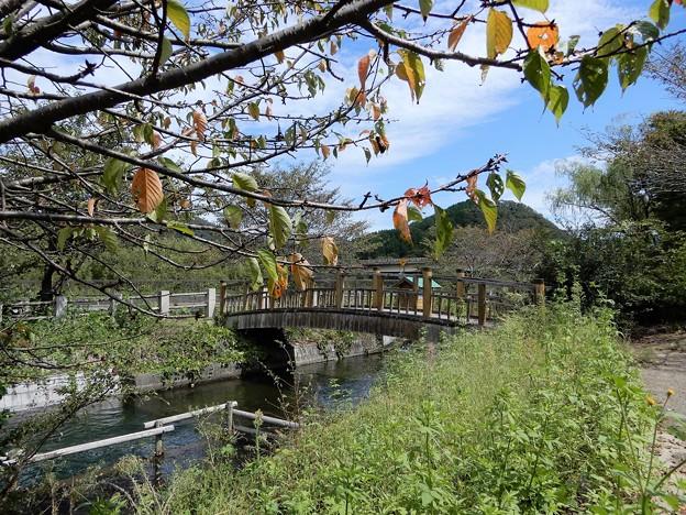 21県道227号が名神高速道路と立体交差する手前の緑地