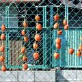 吊るし柿 (3)