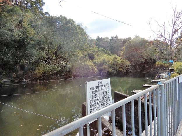 墓地東側のため池