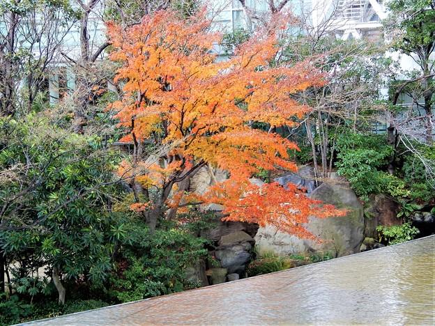 新梅田シテイ・中自然の森
