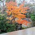 Photos: 新梅田シテイ・中自然の森