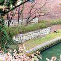 Photos: 旧大和川・淀川合流点付近の大和川左岸石垣遺構 (3)