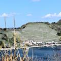 宇和島市「遊子水荷浦の段畑(ゆすみずがうらのだんばた)」遠景