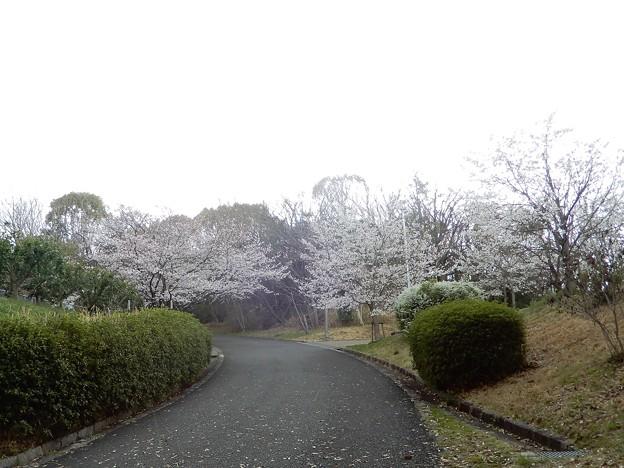08山田池公園 (2)