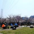前日の風景・花園中央公園・桜広場 (1)