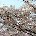 満開の花 (2)