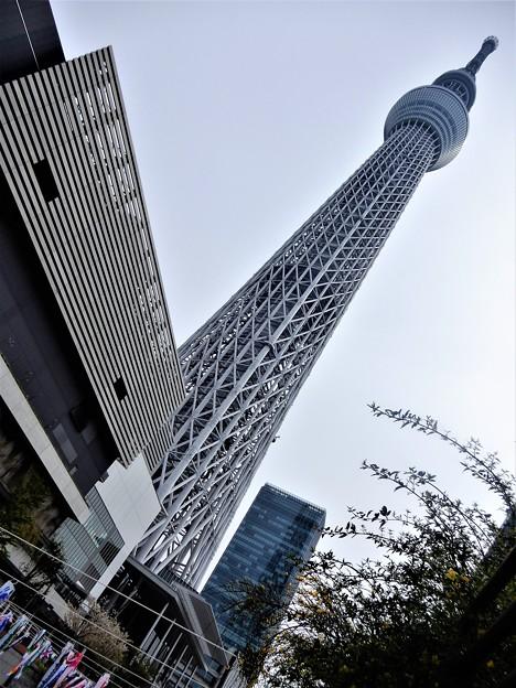 05東京スカイツリー (2)