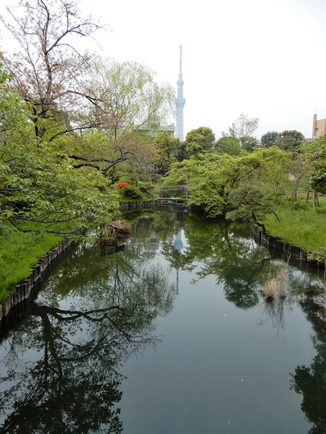 09向島百花園と東京スカイツリー