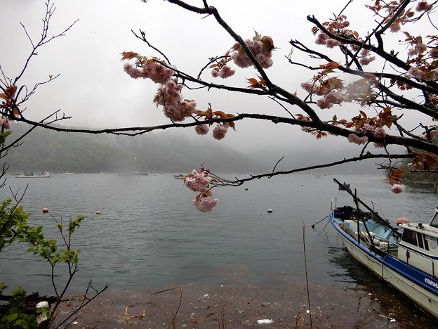 10日向湖 (1)