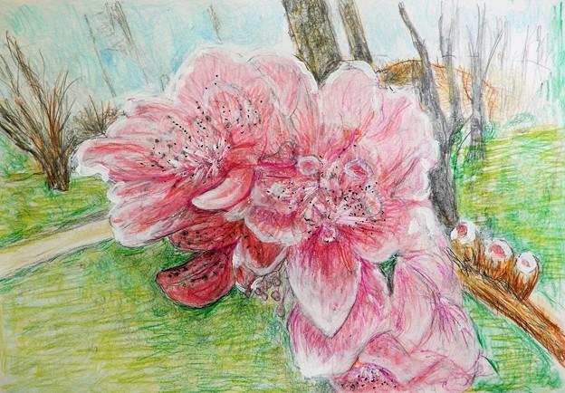 大阪城桃園の桃の花