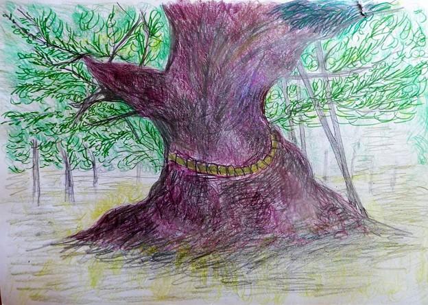 クスノキの巨木