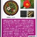 Photos: 37松山市のマンホールカード (2)