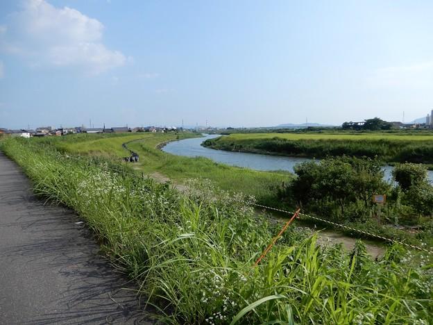 鴨川自転車道 (2)