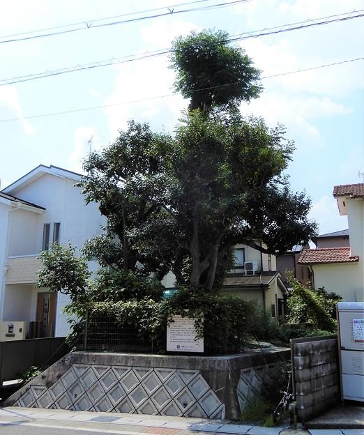 将軍塚 (2)
