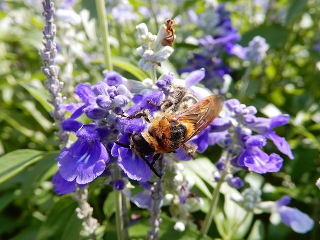 蜂 (2)
