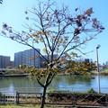 Photos: ハシドイ (1)