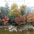 新梅田シティ・中自然の森