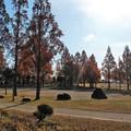 花園中央公園 (2)