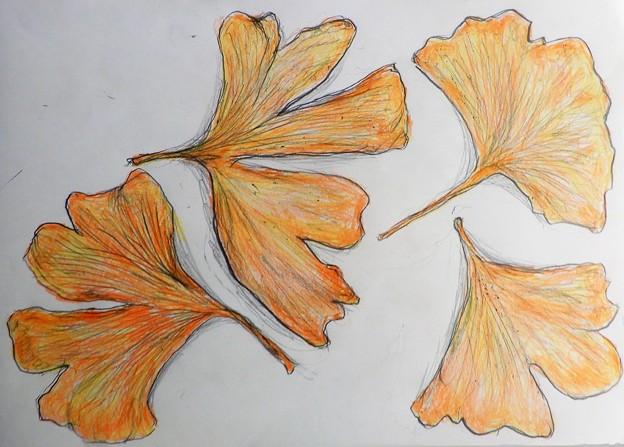 イチョウの葉from小万知さん