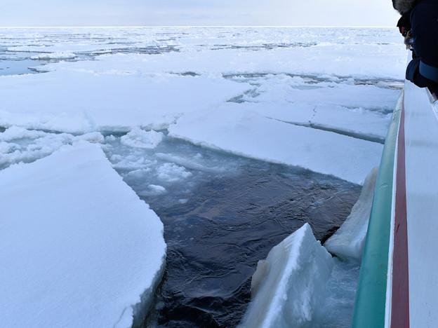 網走、おーろら号流氷観光船の船首(右舷の砕氷された流氷の断面)