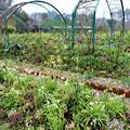 モネの庭(花の庭)