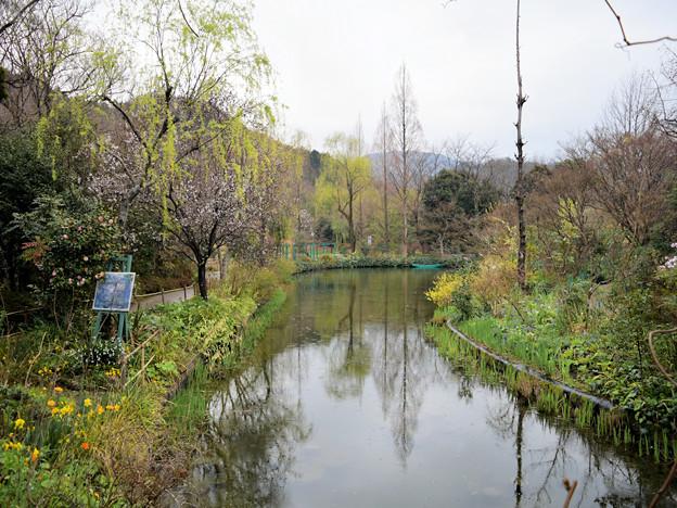 Photos: モネの庭(水の庭)