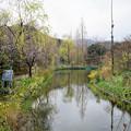 モネの庭(水の庭)
