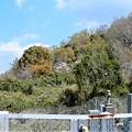 墓地から山側を眺めてみれば (1)
