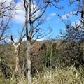 神津嶽下、腰掛石から生駒山を望む (1)