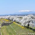 Photos: 白石川一目千本桜(柴田町)