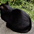 Photos: 黒猫やまと (1)