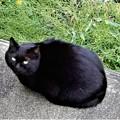 Photos: 黒猫やまと (3)