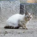 Photos: 白猫・池の島子 (1)