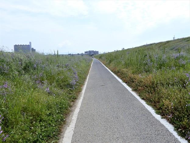 石川自転車道