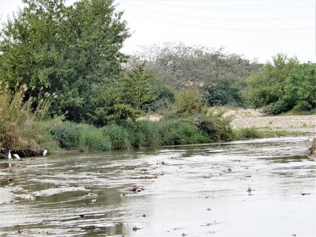 梅川河口付近(石川に合流) (1)