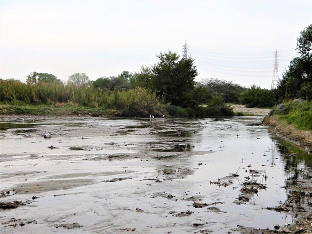 梅川河口付近(石川に合流) (2)