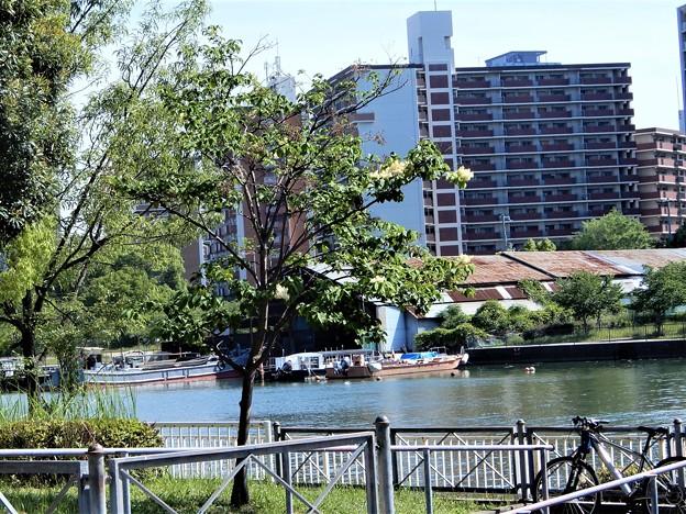 Photos: ハシドイの花 (5)