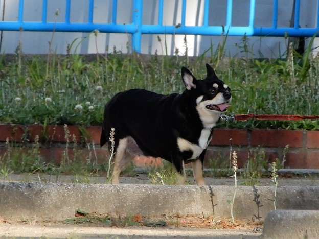 長田中公園で見かけたワンちゃん (2)