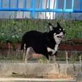 Photos: 長田中公園で見かけたワンちゃん (2)