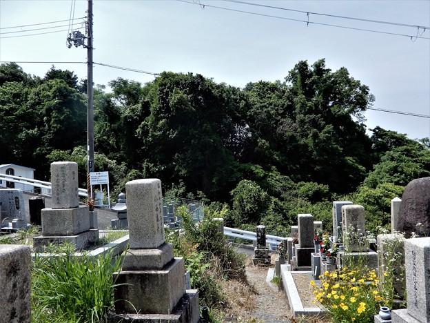 墓参20200605 (1)