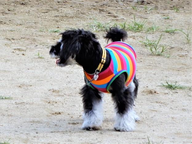 花園中央公園のドッグランで見かけたワンちゃん (1)
