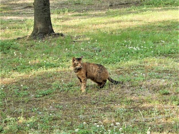キジトラ猫のネコロン (1)