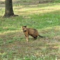 Photos: キジトラ猫のネコロン (1)