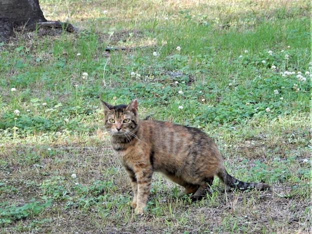 キジトラ猫のネコロン (2)